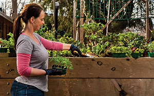 A proper raised vegetable garden box will provide fresh, home-grown vegetables all year round.